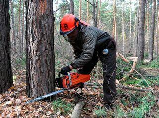 В поселке Манском под коттеджную застройку отдали участок с вековым лесом