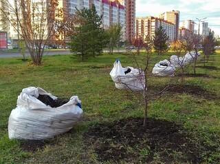 Почему красноярцы не видят результатов озеленения города?