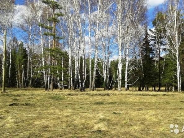 Продам  земельный участок, 35 соток, Емельяново. Фото 4.
