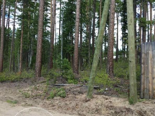 Продам  земельный участок, 800 соток, Горячинск. Фото 3.